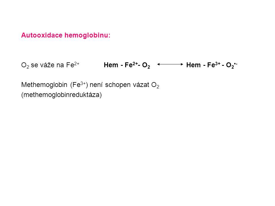 Autooxidace hemoglobinu: O 2 se váže na Fe 2+ Hem - Fe 2+ - O 2 Hem - Fe 3+ - O 2 - Methemoglobin (Fe 3+ ) není schopen vázat O 2 (methemoglobinredukt