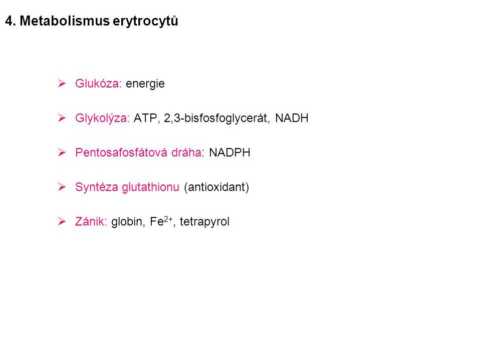  Glukóza: energie  Glykolýza: ATP, 2,3-bisfosfoglycerát, NADH  Pentosafosfátová dráha: NADPH  Syntéza glutathionu (antioxidant)  Zánik: globin, F