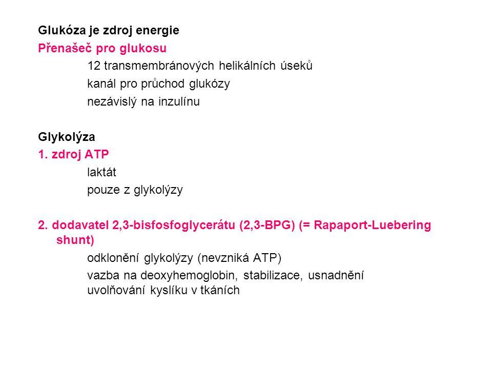 Glukóza je zdroj energie Přenašeč pro glukosu 12 transmembránových helikálních úseků kanál pro průchod glukózy nezávislý na inzulínu Glykolýza 1. zdro