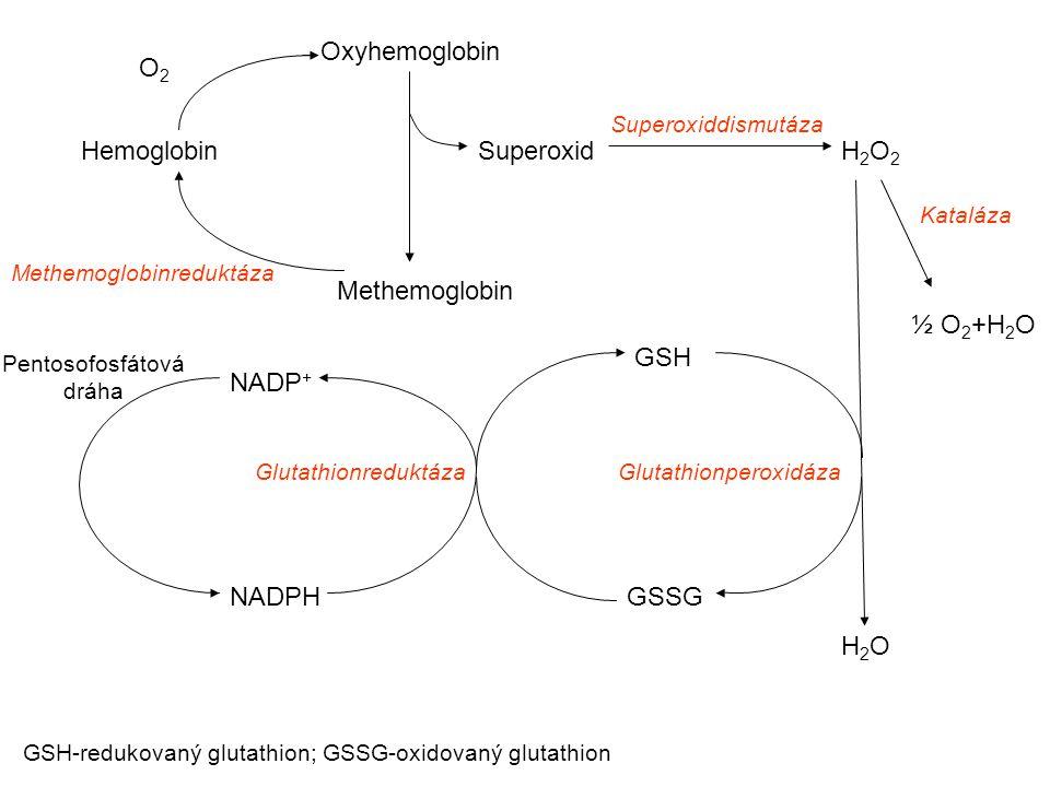 Hemoglobin Oxyhemoglobin Methemoglobin Methemoglobinreduktáza O2O2 Superoxid Superoxiddismutáza H2O2H2O2 Kataláza ½ O 2 +H 2 O Glutathionperoxidáza H2