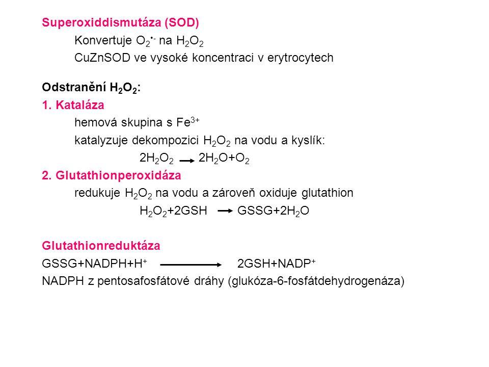 Superoxiddismutáza (SOD) Konvertuje O 2 - na H 2 O 2 CuZnSOD ve vysoké koncentraci v erytrocytech Odstranění H 2 O 2 : 1. Kataláza hemová skupina s Fe