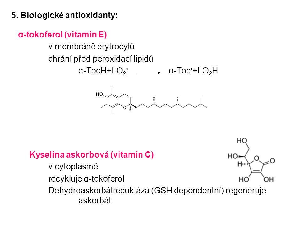 α-tokoferol (vitamin E) v membráně erytrocytů chrání před peroxidací lipidů α-TocH+LO 2 α-Toc +LO 2 H Kyselina askorbová (vitamin C) v cytoplasmě recy