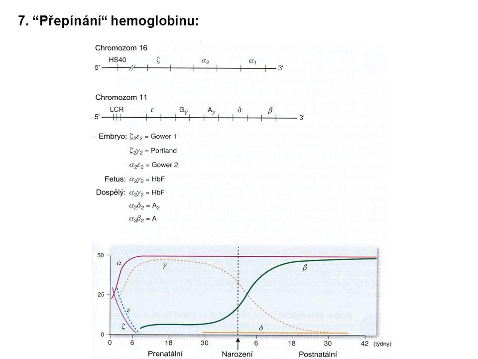 """7. """"Přepínání"""" hemoglobinu:"""