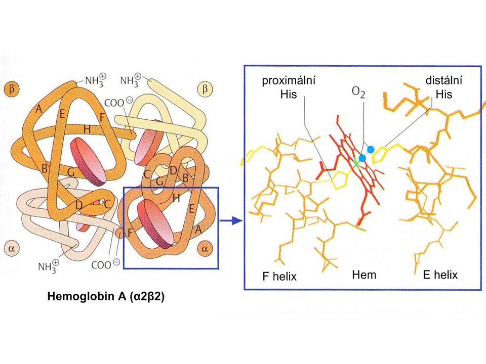 Prostorové změny hemu a F-helixu během přechodu mezi T a R-formou hemoglobinu: