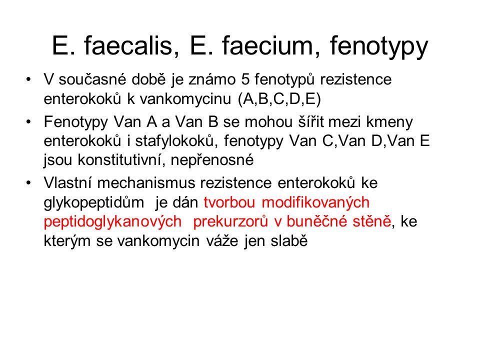 E.faecalis, E.