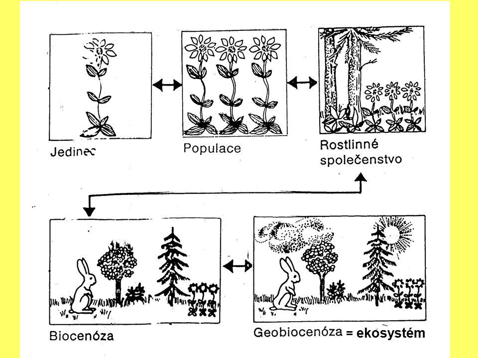 Základní problematika ekologie Ekosystém – strukturální a funkční celek biocenózy Nezbytné složky: 1.