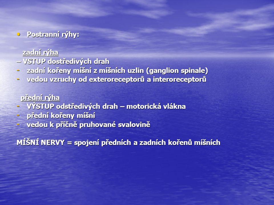 Postranní rýhy: Postranní rýhy: zadní rýha zadní rýha – VSTUP dostředivých drah - zadní kořeny míšní z míšních uzlin (ganglion spinale) - vedou vzruch
