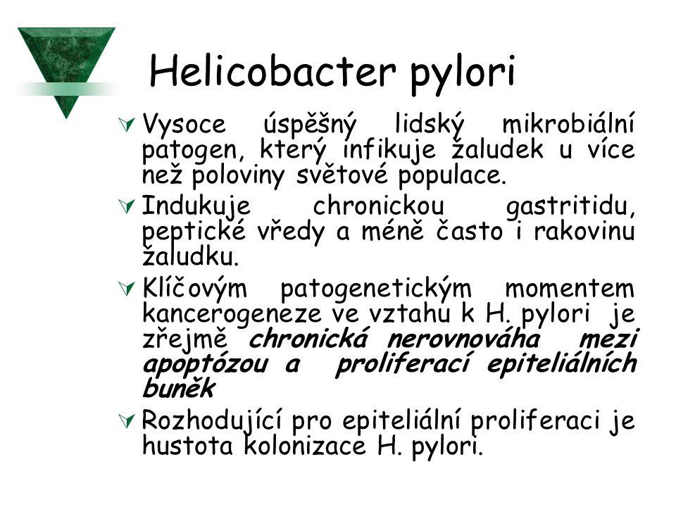 Helicobacter pylori  Vysoce úspěšný lidský mikrobiální patogen, který infikuje žaludek u více než poloviny světové populace.