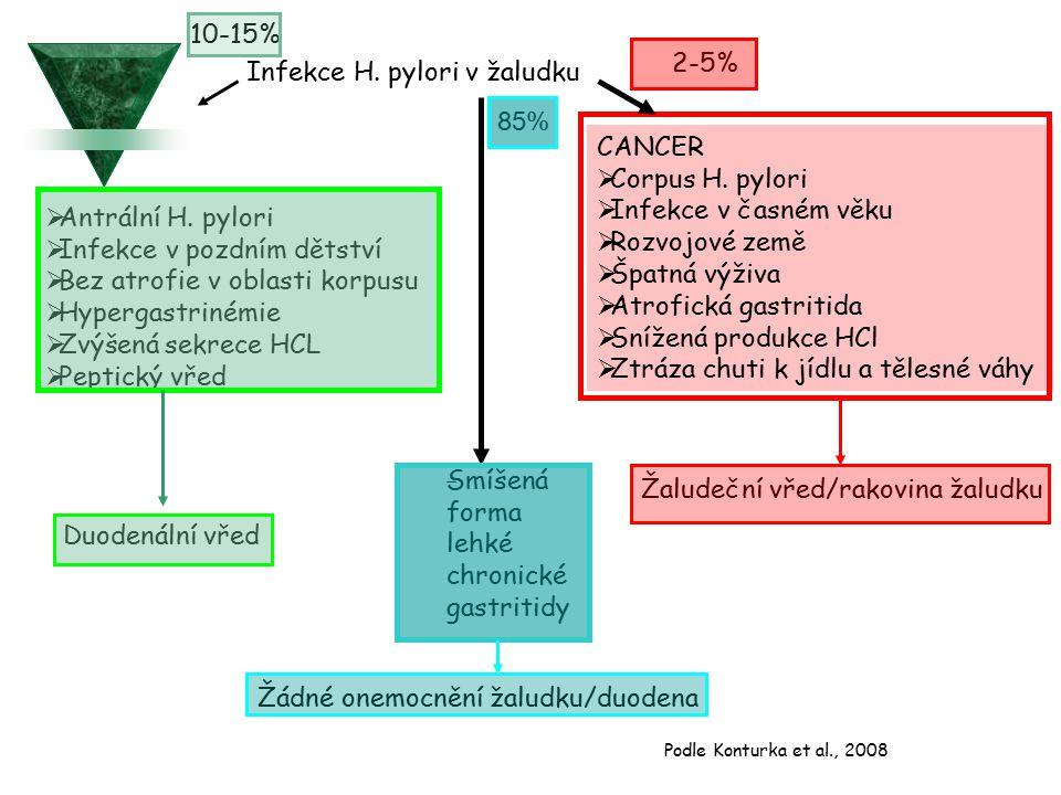 Infekce H. pylori v žaludku  Antrální H.
