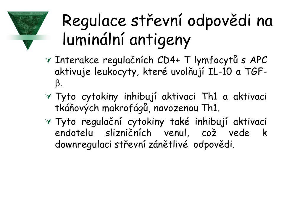 Regulace střevní odpovědi na luminální antigeny  Interakce regulačních CD4+ T lymfocytů s APC aktivuje leukocyty, které uvolňují IL-10 a TGF- .