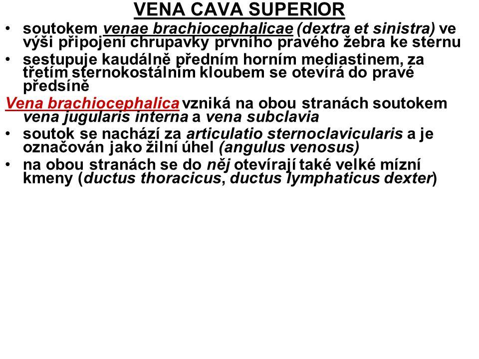 VENA JUGULARIS INTERNA krev z dutiny lební, obličejových oblastí hlavy a krku začíná rozšířením bulbus superior venae jugularis internae, za sternoklavikulárním kloubem se rozšiřuje v bulbus inferior venae jugularis internae přítoky intrakraniální a extrakraniální: 1) Intrakraniální přítoky sinus durae matris (bez hladké svaloviny a chlopní, při otevření nekolabují, průtok krve oběma směry)