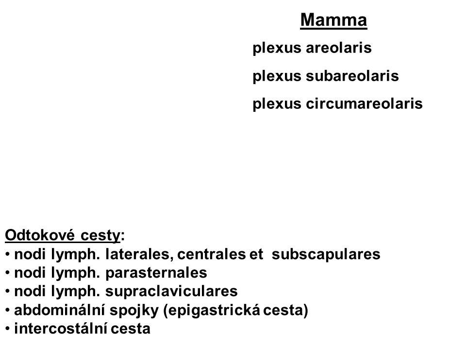 plexus areolaris plexus subareolaris plexus circumareolaris Mamma Odtokové cesty: nodi lymph. laterales, centrales et subscapulares nodi lymph. parast