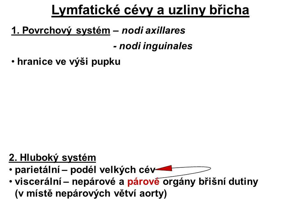 Lymfatické cévy a uzliny břicha 1.