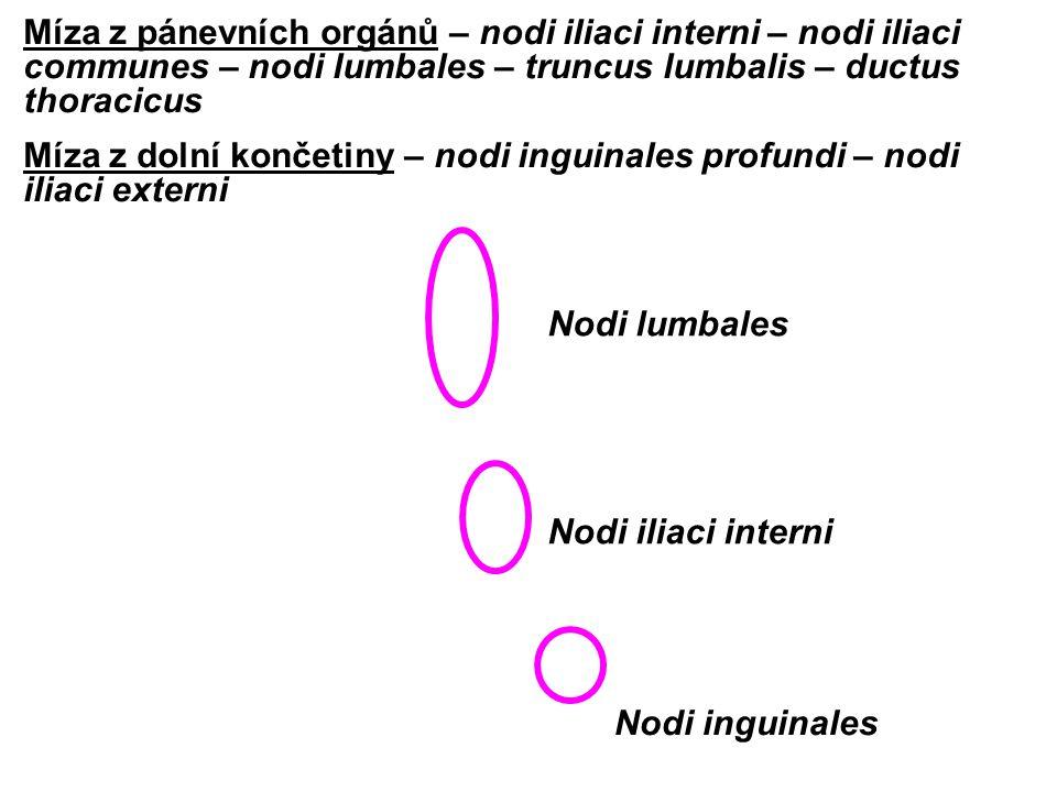 Nodi lumbales Nodi iliaci interni Nodi inguinales Míza z pánevních orgánů – nodi iliaci interni – nodi iliaci communes – nodi lumbales – truncus lumba