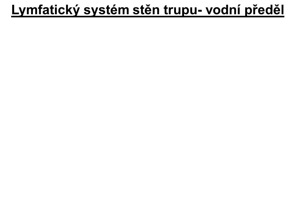 Lymfatický systém stěn trupu- vodní předěl