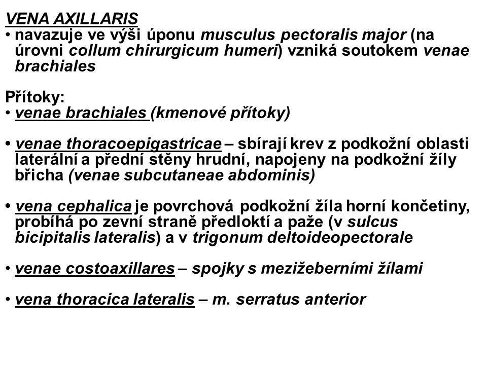 VENA AXILLARIS navazuje ve výši úponu musculus pectoralis major (na úrovni collum chirurgicum humeri) vzniká soutokem venae brachiales Přítoky: venae brachiales (kmenové přítoky) venae thoracoepigastricae – sbírají krev z podkožní oblasti laterální a přední stěny hrudní, napojeny na podkožní žíly břicha (venae subcutaneae abdominis) vena cephalica je povrchová podkožní žíla horní končetiny, probíhá po zevní straně předloktí a paže (v sulcus bicipitalis lateralis) a v trigonum deltoideopectorale.