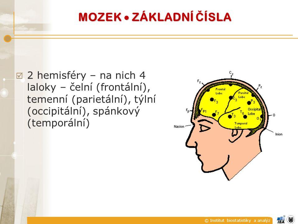 © Institut biostatistiky a analýz  2 hemisféry – na nich 4 laloky – čelní (frontální), temenní (parietální), týlní (occipitální), spánkový (temporáln