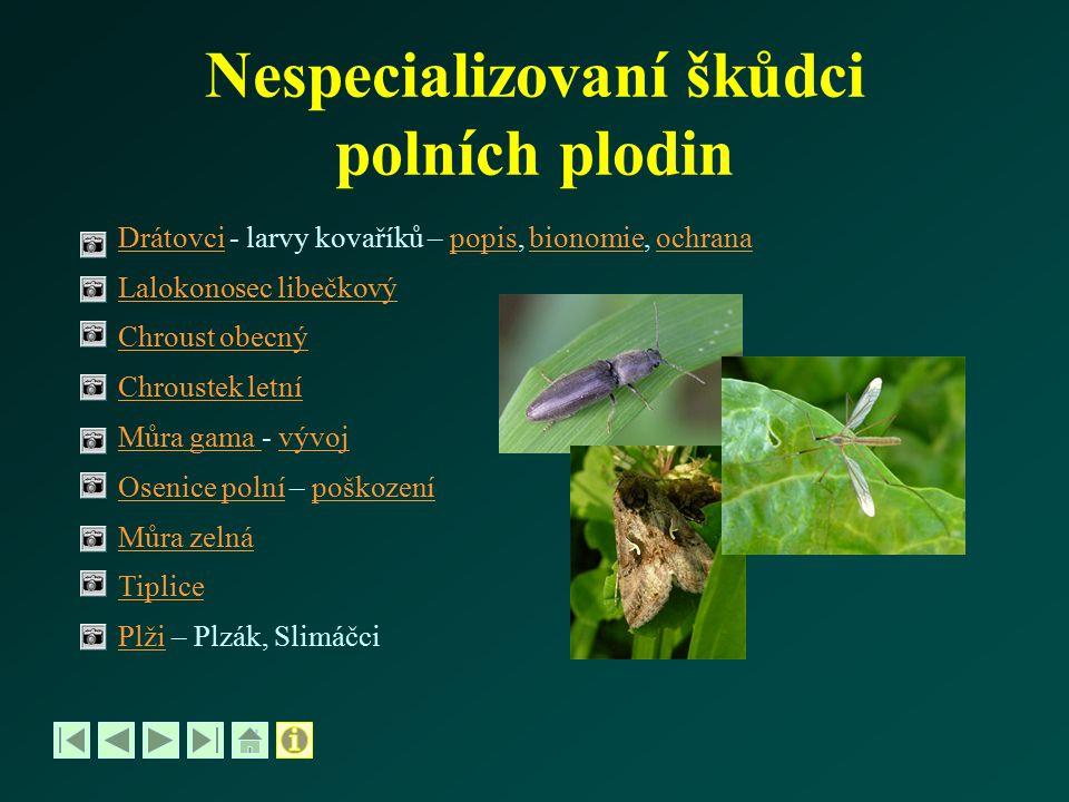 Osenice polní - poškození rostlin Poškození rostlin - drobně skeletuje listy, horní pokožka je nepoškozenáskeletuje - později působí okrajové okusy a okénkuje listyokrajové okusy okénkuje - na hlavě bulvy vykusuje až 2 cm velké jamky - škodlivé výskyty jsou jen v některých letech Živné rostliny: polyfágní, škodit může na řepě, tabáku, paprice,polyfágní máku, bramborách, řepce a dalších