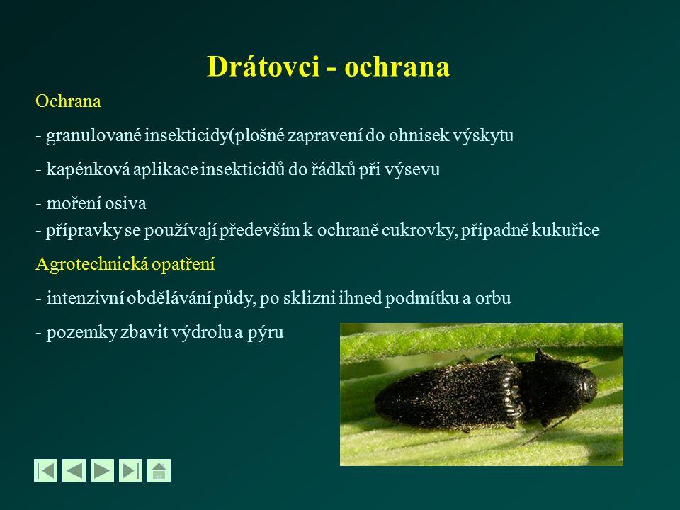 Tiplice – Tipula řád Dvoukřídlí – Diptera, čeleď Tiplicovití - Tipulidae -dospělci podobní velkým komárům -larvy velké až 4 cm -vajíčka kladou do vlhkých míst -larvy škodí okusem kořínků, nad půdou i listů -ročně mají 1-2 generace (dle druhu) -významné škody působí lokálně OCHRANA: odvodnění vlhkých míst