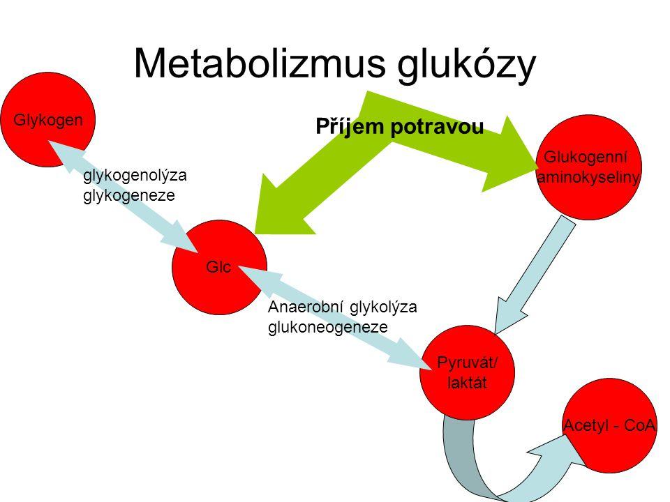 Glykogen Metabolizmus glukózy Glukogenní aminokyseliny Acetyl - CoA Pyruvát/ laktát Anaerobní glykolýza glukoneogeneze glykogenolýza glykogeneze Příje