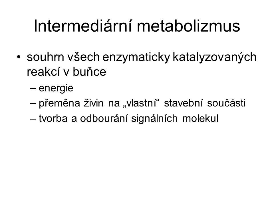 Biochemická charakteristika prostého hladovění Vzestup koncentrace adrenalinu, glukagonu, později glukokortikoidů Vyčerpání zásob jaterního glykogenu (za 12-24 hod) Zvýšená glukoneogeneze Pokles sekrece inzulínu (antagonismus s glukokortikoidy) Zvýšená lipolýza se zvýšenou ketogenezí (kys.