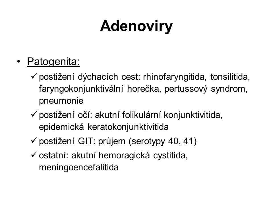 Adenoviry Patogenita: postižení dýchacích cest: rhinofaryngitida, tonsilitida, faryngokonjunktivální horečka, pertussový syndrom, pneumonie postižení