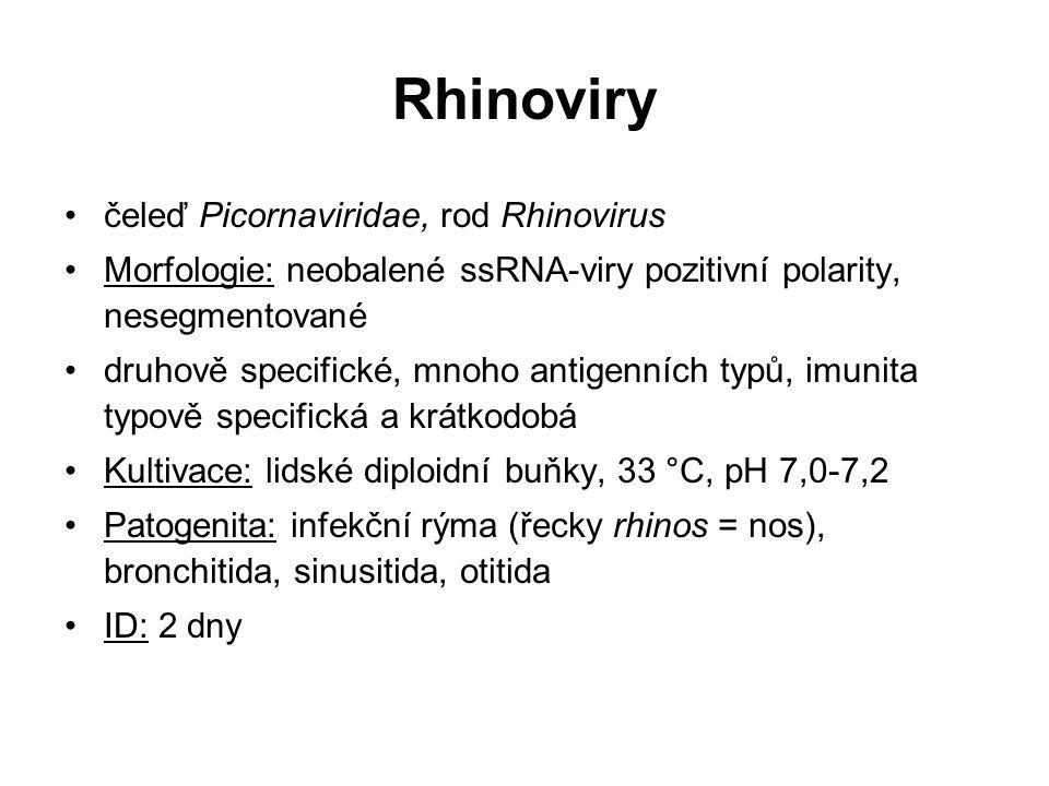 Rhinoviry čeleď Picornaviridae, rod Rhinovirus Morfologie: neobalené ssRNA-viry pozitivní polarity, nesegmentované druhově specifické, mnoho antigenní