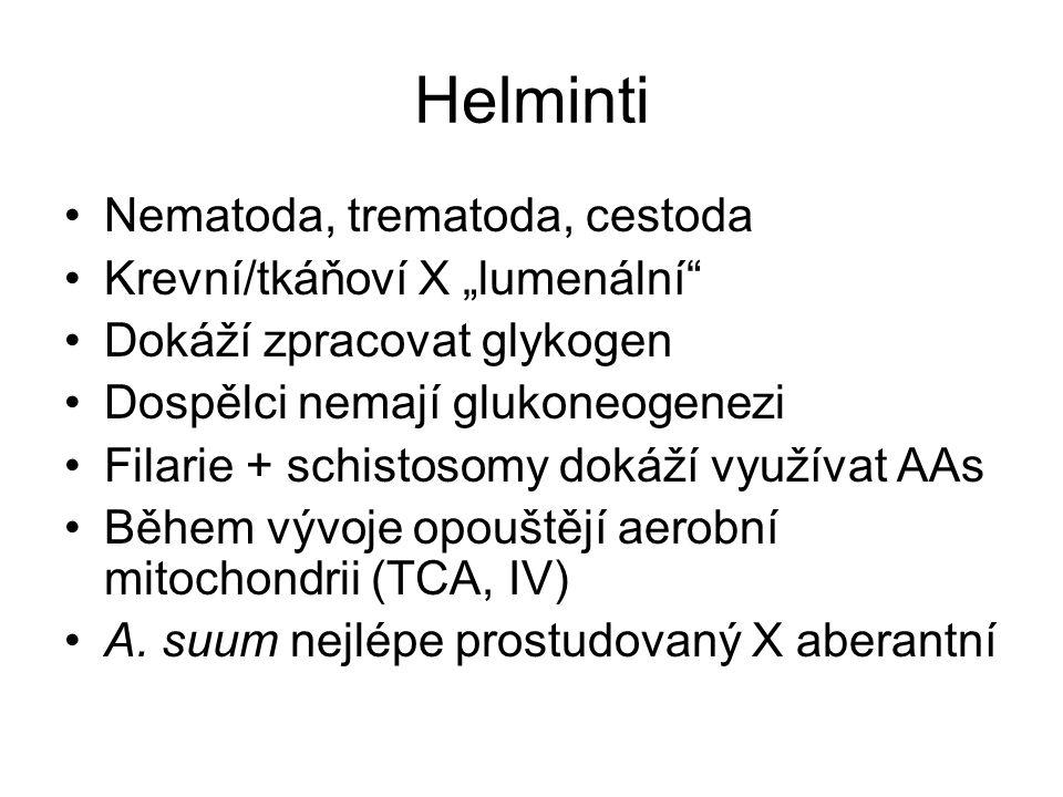 1 2 3 klíště 4 5 52 Hem pro vlastní potřebu U čl. konverze na bilirubin Pigmentace kojugátů s AA