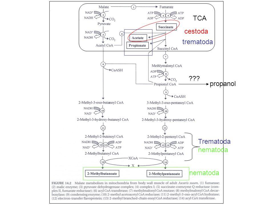 TCA cestoda trematoda nematoda Trematoda nematoda ??? propanol