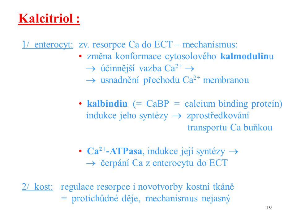 19 1/ enterocyt: zv. resorpce Ca do ECT – mechanismus: změna konformace cytosolového kalmodulinu  účinnější vazba Ca 2+   usnadnění přechodu Ca 2+