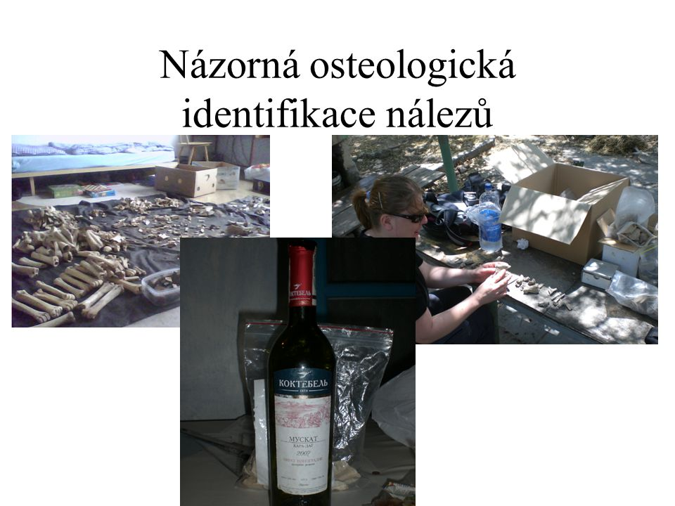 Názorná osteologická identifikace nálezů