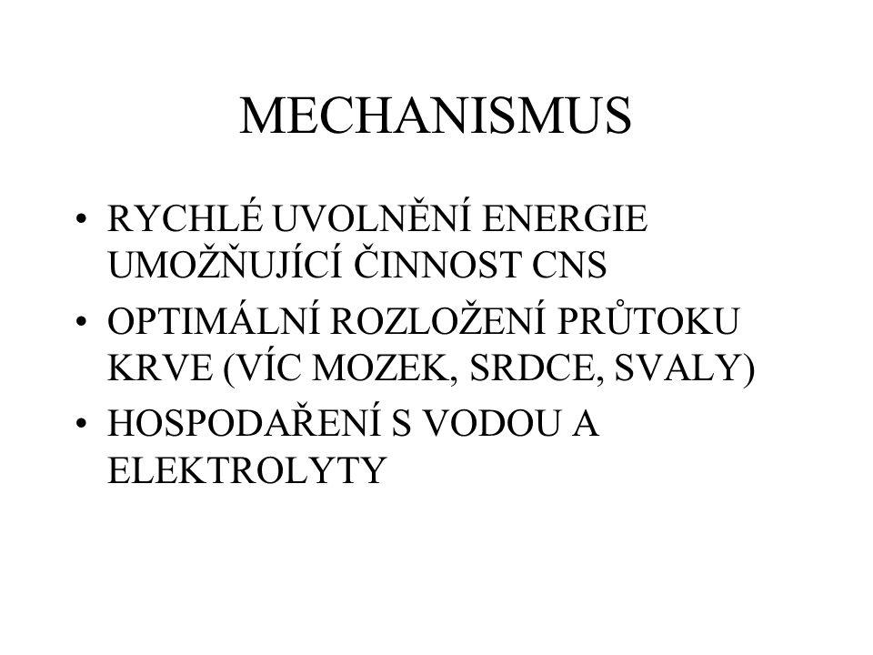 MECHANISMUS RYCHLÉ UVOLNĚNÍ ENERGIE UMOŽŇUJÍCÍ ČINNOST CNS OPTIMÁLNÍ ROZLOŽENÍ PRŮTOKU KRVE (VÍC MOZEK, SRDCE, SVALY) HOSPODAŘENÍ S VODOU A ELEKTROLYTY