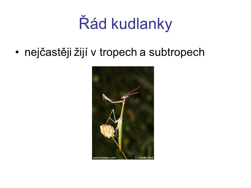 Řád kudlanky nejčastěji žijí v tropech a subtropech