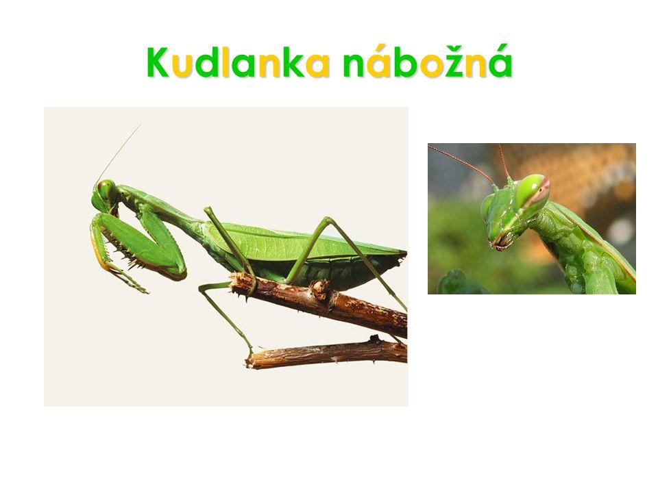 PotravaPotravaPotravaPotrava Brouci, včely, cvrčci, motýli Mloci, ještěrky, žáby, malí ptáci a želvy, myši