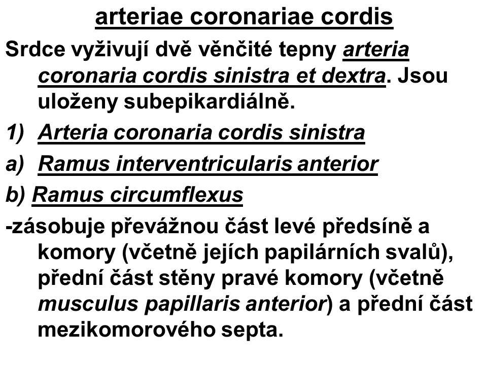 arteriae coronariae cordis Srdce vyživují dvě věnčité tepny arteria coronaria cordis sinistra et dextra. Jsou uloženy subepikardiálně. 1)Arteria coron