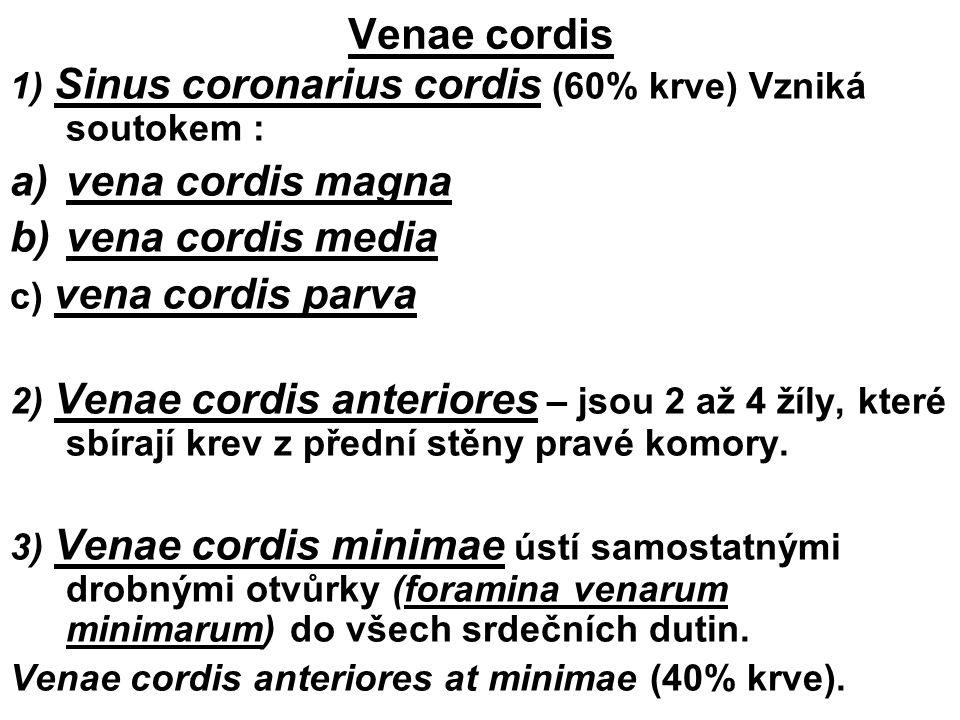 Venae cordis 1) Sinus coronarius cordis (60% krve) Vzniká soutokem : a)vena cordis magna b)vena cordis media c) vena cordis parva 2) Venae cordis ante