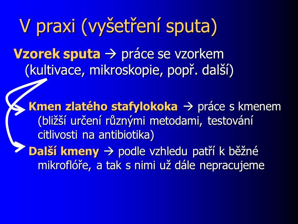 V praxi (vyšetření sputa) Vzorek sputa  práce se vzorkem (kultivace, mikroskopie, popř. další) Kmen zlatého stafylokoka  práce s kmenem (bližší urče