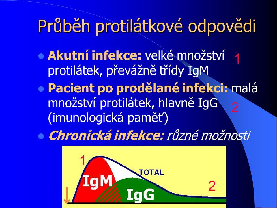 Průběh protilátkové odpovědi Akutní infekce: velké množství protilátek, převážně třídy IgM Pacient po prodělané infekci: malá množství protilátek, hlavně IgG (imunologická paměť) Chronická infekce: různé možnosti 1 1 2 2