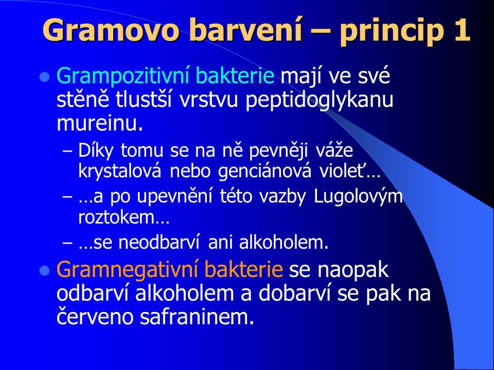 Gramovo barvení – princip 1 Grampozitivní bakterie mají ve své stěně tlustší vrstvu peptidoglykanu mureinu.