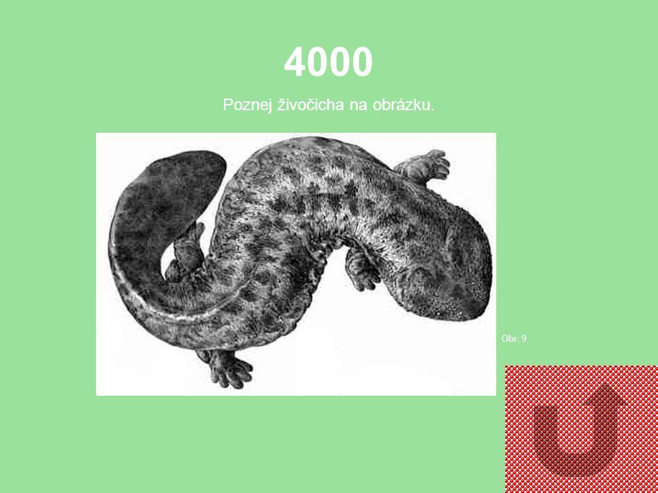 3000 Poznej živočicha na obrázku. Obr. 8