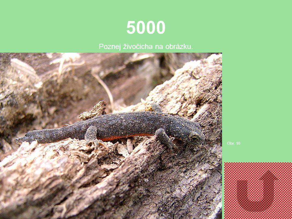 4000 Poznej živočicha na obrázku. Obr. 9
