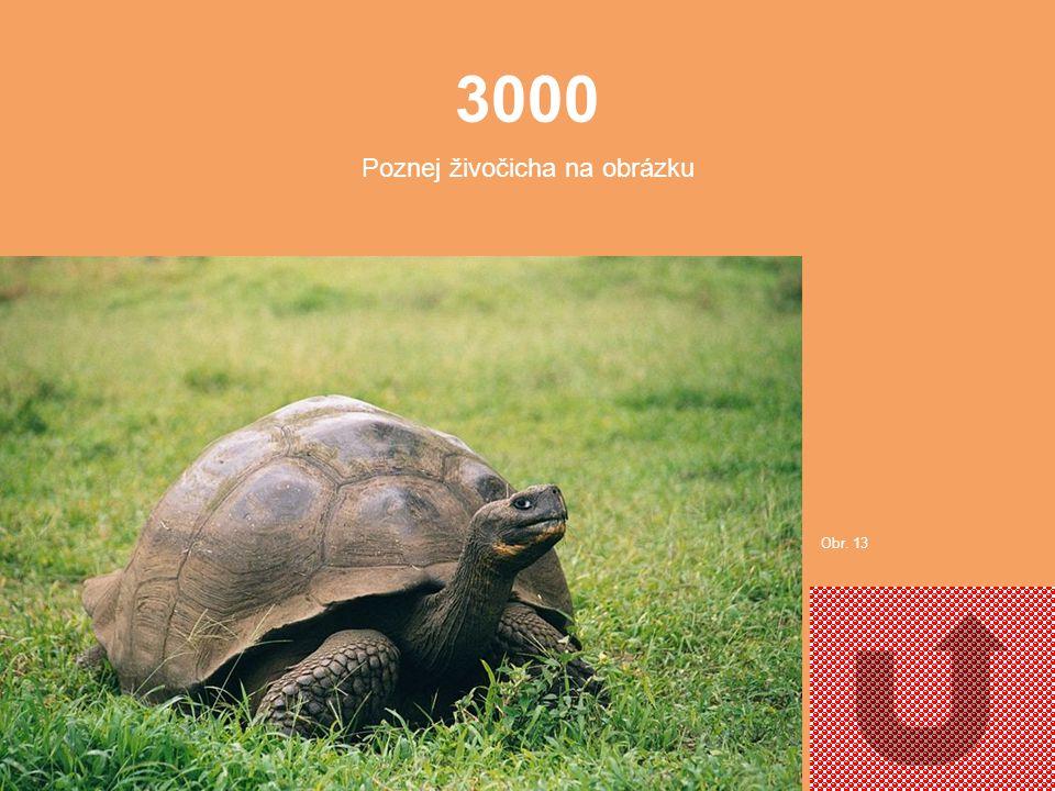 2000 Poznej živočicha na obrázku. Obr. 12