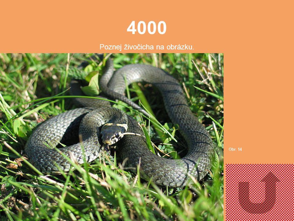 3000 Poznej živočicha na obrázku Obr. 13