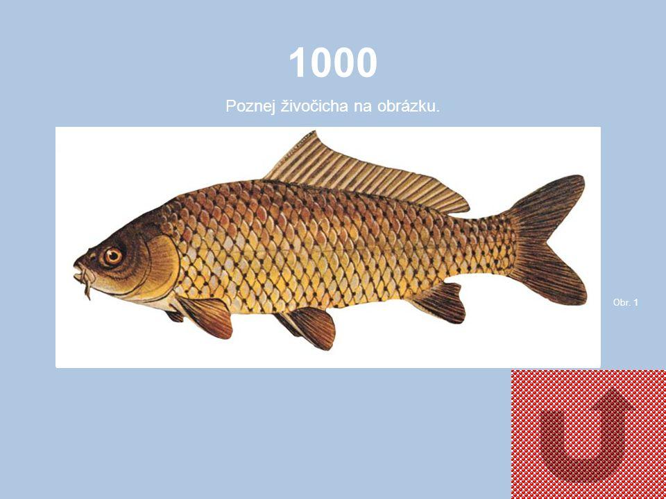1000 Poznej živočicha na obrázku. Obr. 1