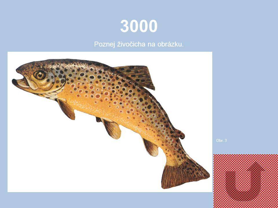 3000 Poznej živočicha na obrázku. Obr. 3