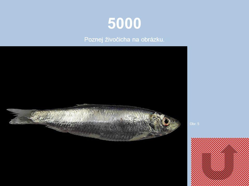 4000 Poznej živočicha na obrázku. Obr. 4