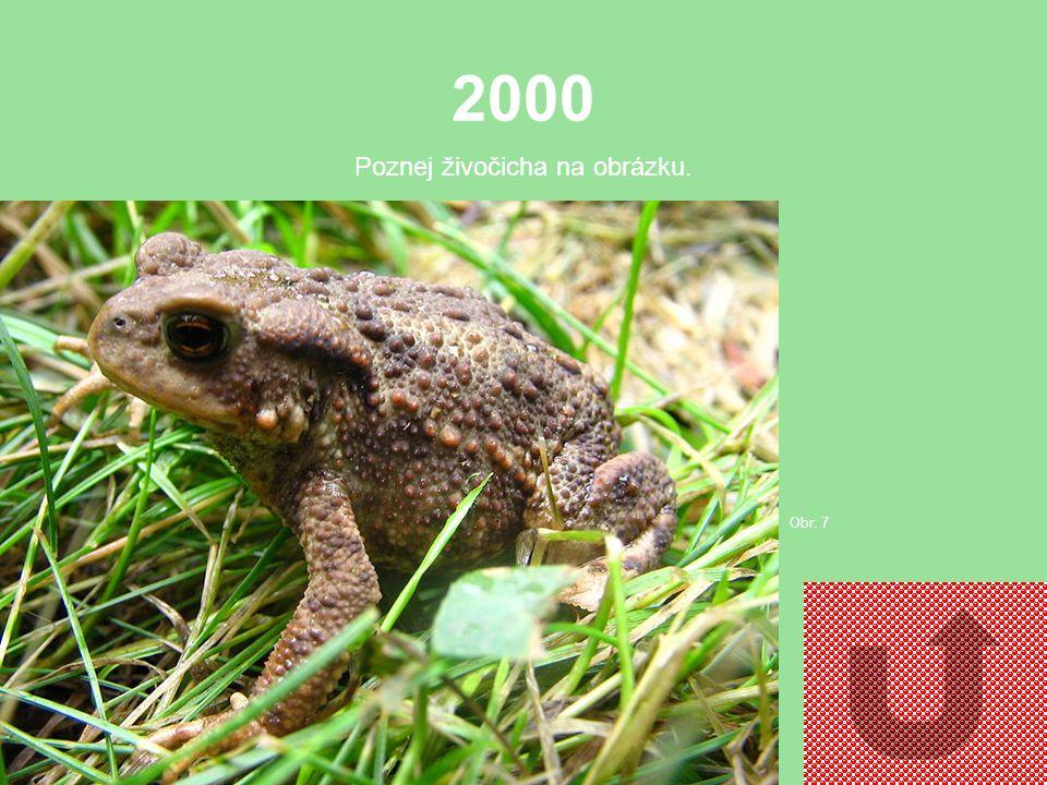 1000 Poznej živočicha na obrázku. Obr. 6