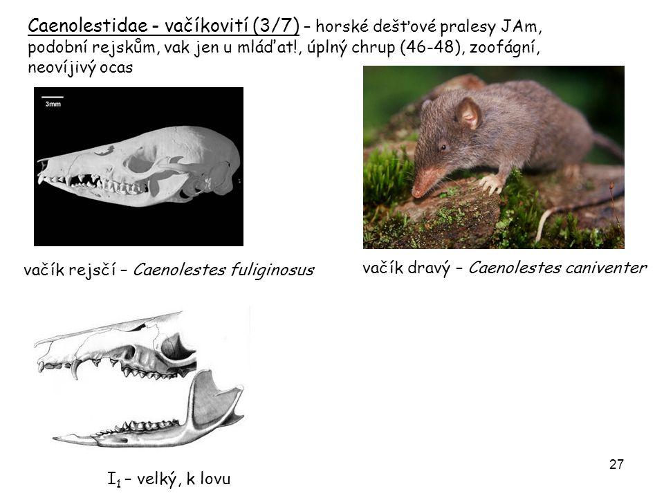 28 Fylogenetický strom vačnatců (Marsupialia) Lat.