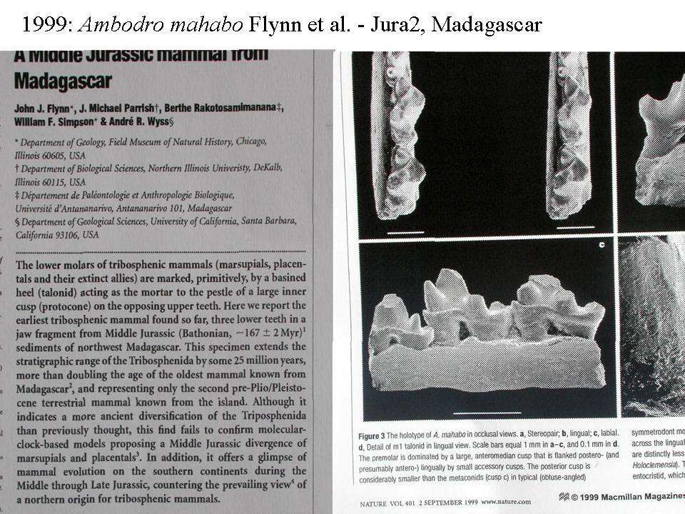 "4 Fylogeneze žijících savců Afrotheria Xenarthra Australidelphia Monotremata ""Ameridelphia Laurasiatheria Euarchontoglires Placentalia Boreoeutheria Marsupialia Atlantogenata 95-115 Myr Murphy et al."