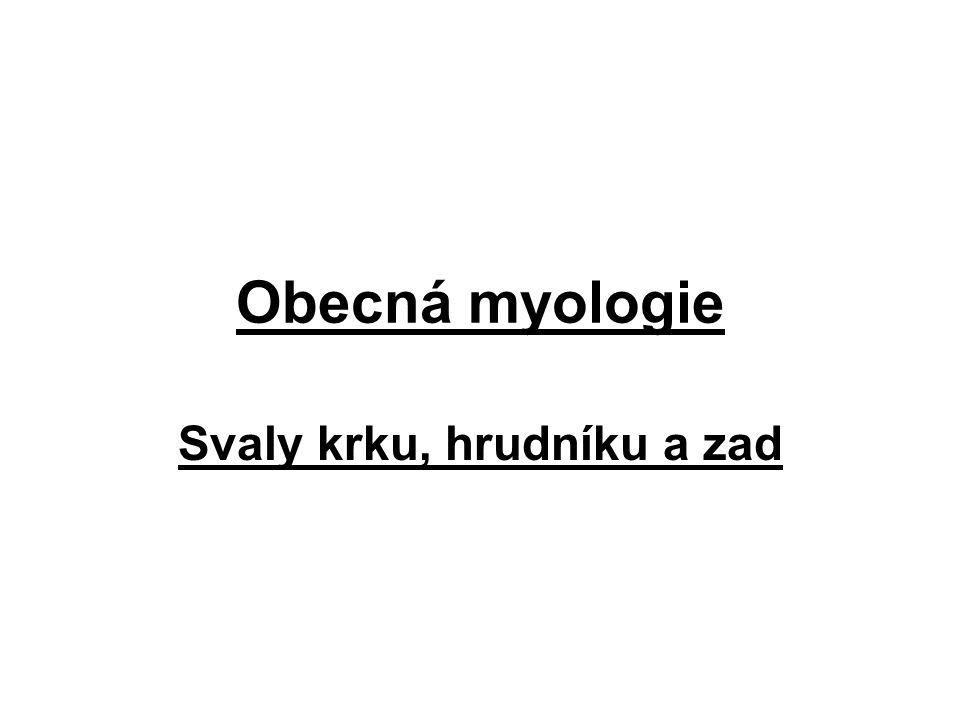 Obecná myologie Svaly krku, hrudníku a zad